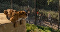 Kupili¶my Zoo / We Bought a Zoo (2011)  PL.720p.BRRip.XviD.AC3-CiNEXCELLENT |Lektor PL +rmvb